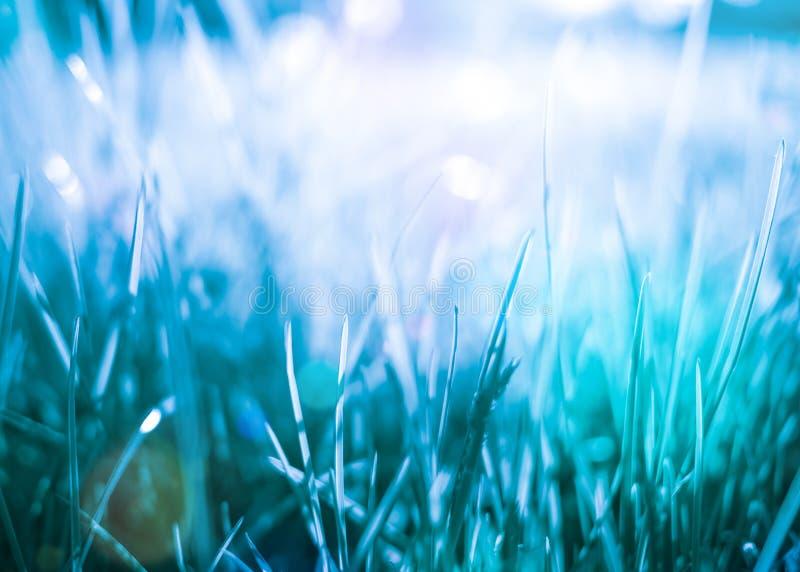 Fond abstrait naturel d'herbe bleue photo stock