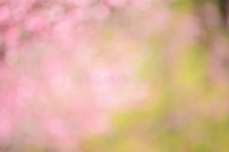 Fond abstrait rose brouillé des fleurs de fleurs de cerisier image libre de droits
