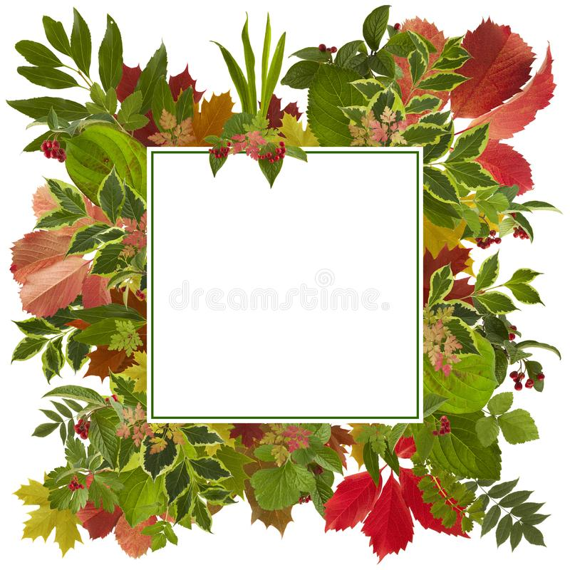 Fond adorable de feuilles d'automne photographie stock