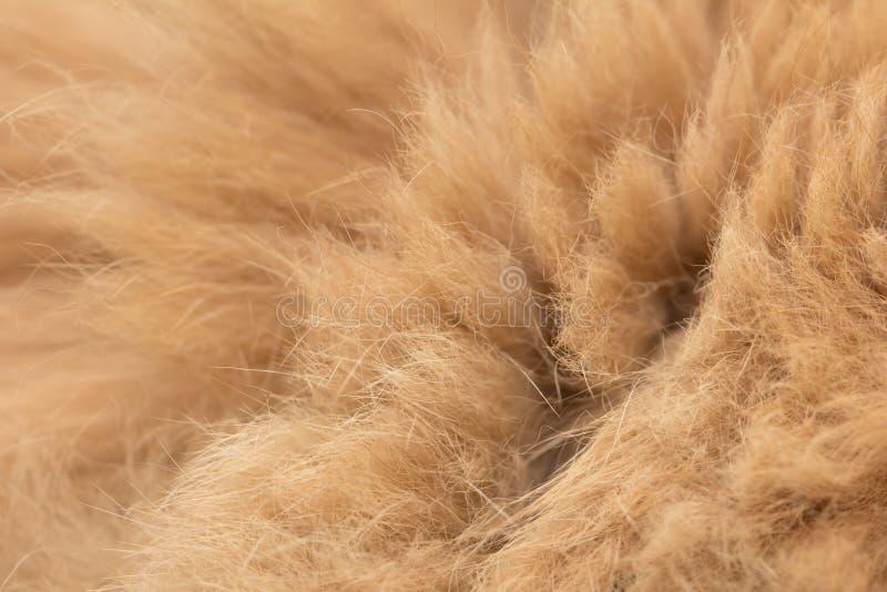 Fond animal de texture de fourrure photo stock