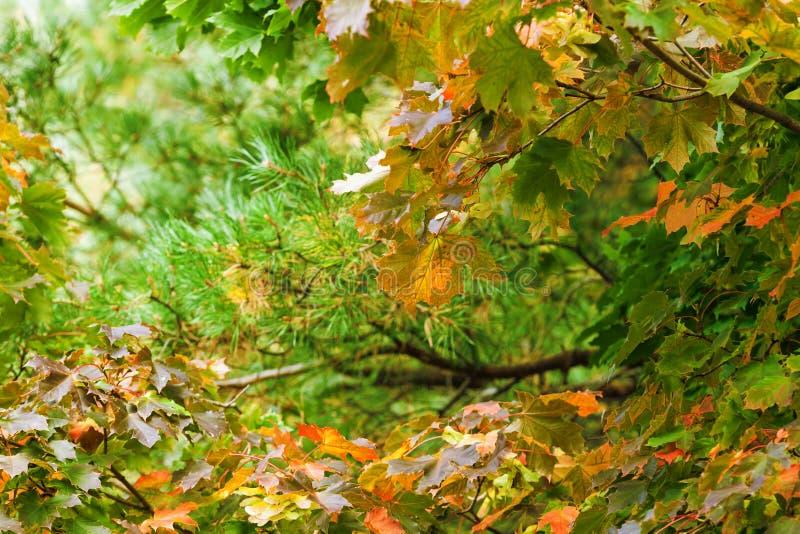 Fond avec des arbres d'automne photo stock
