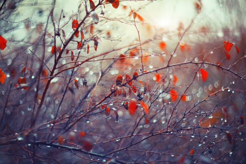 Fond avec des branches et des gouttes de pluie photos libres de droits