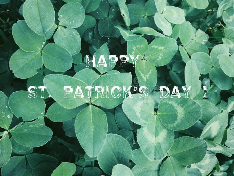 Fond avec des oxalidex petite oseille Symbole de vacances de jour du ` s de St Patrick image stock