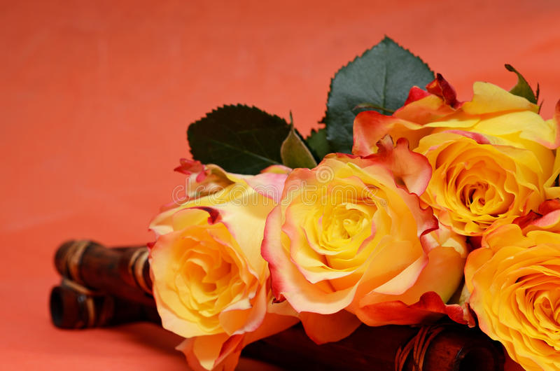Fond avec des roses photos libres de droits