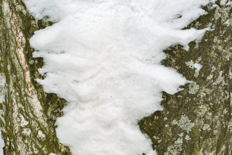 Fond avec l'écorce et la neige de bouleau image libre de droits