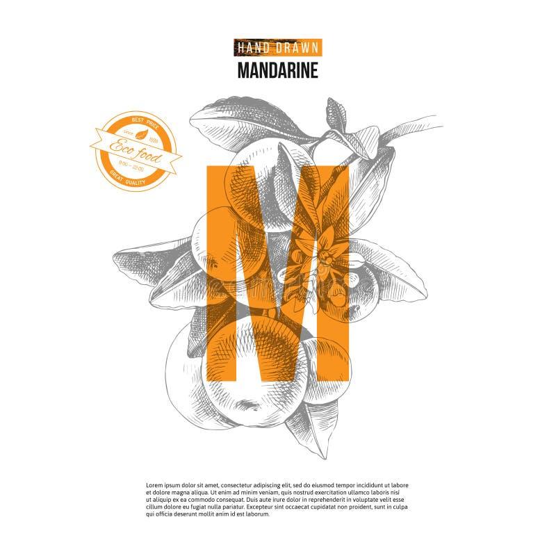 Fond avec la branche tirée par la main de mandarine illustration libre de droits