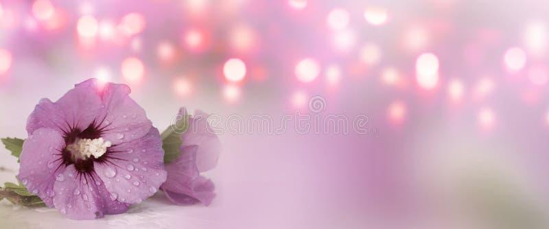 Fond avec la fleur de ketmie pour le jour de mères image libre de droits