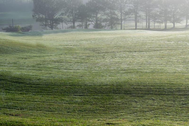 Fond avec le beau pré vert et la lumière du soleil jaune, partie de colline d'herbe de couverture de brouillard photo stock