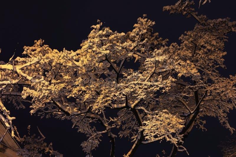 Fond avec les branches neigeuses images stock