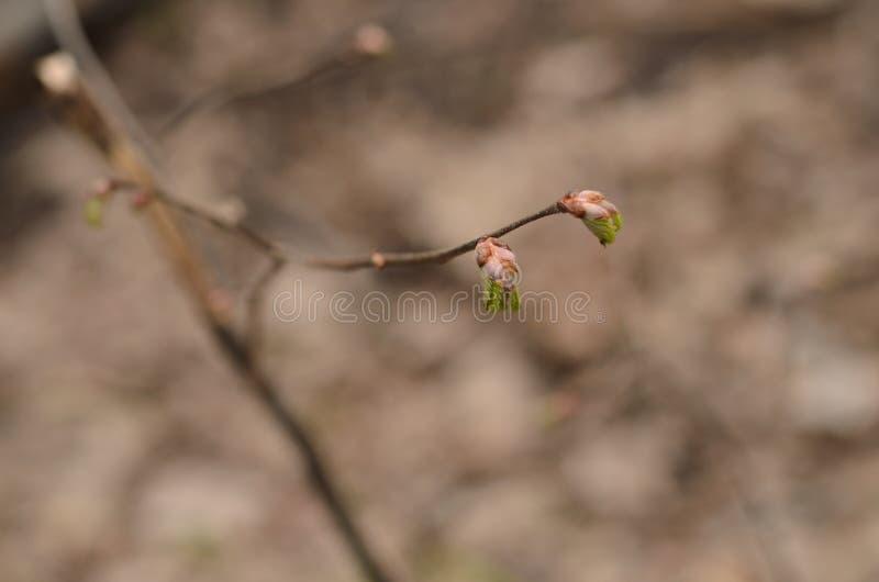 Fond avec les feuilles sortant photos stock