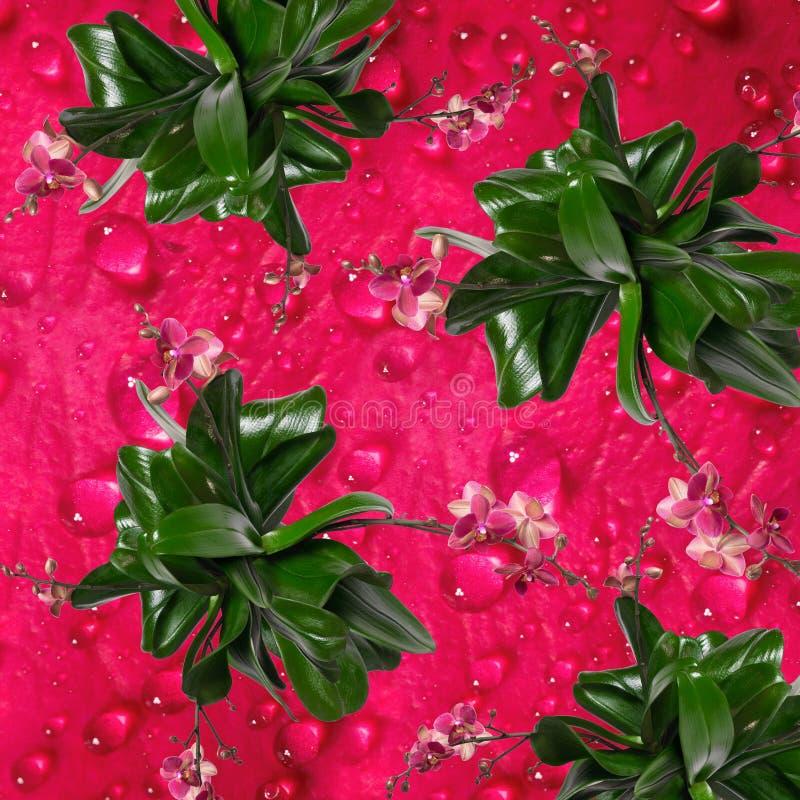 Fond avec un modèle des fleurs des orchidées photos stock