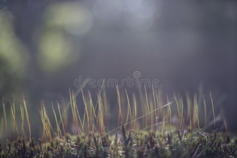 Fond avec une broussaille de nature dans le ton et la lumière bleus photo stock
