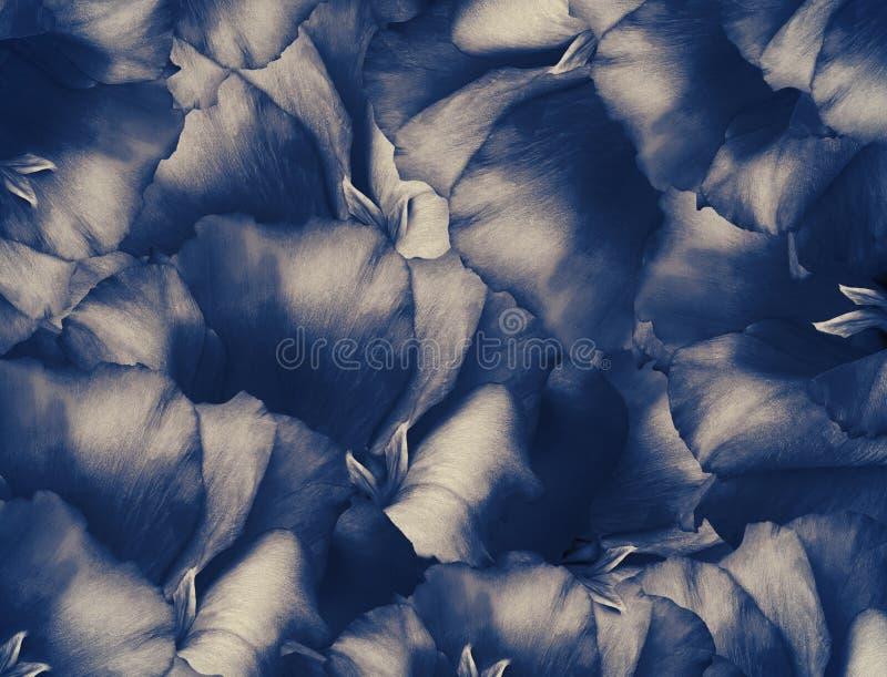 Fond blanc-bleu de cru floral Un bouquet des fleurs de turquoise Plan rapproch? collage floral Composition de fleur illustration de vecteur