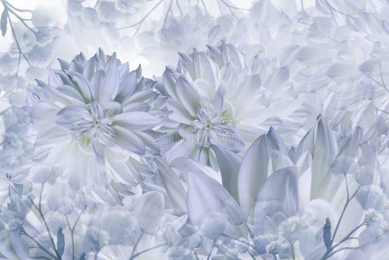 Fond blanc-bleu floral Fleurs de dahlias en gros plan sur un fond blanc Pétales des fleurs image libre de droits