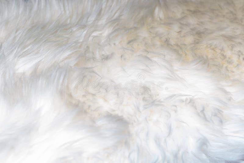 Fond blanc de la laine molle, plan rapproché de la fourrure pelucheuse blanche, laine avec un ton beige, fourrure avec une nuance photo libre de droits