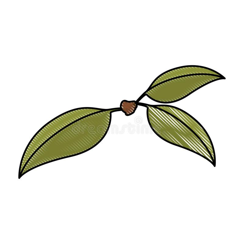 Fond blanc de la silhouette colorée de crayon de trois feuilles vertes de cerise de tige illustration libre de droits