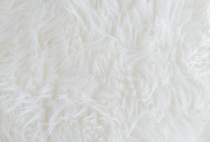 Fond blanc de texture de fourrure photographie stock libre de droits