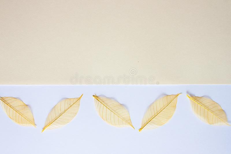 Fond blanc jaune en pastel images stock