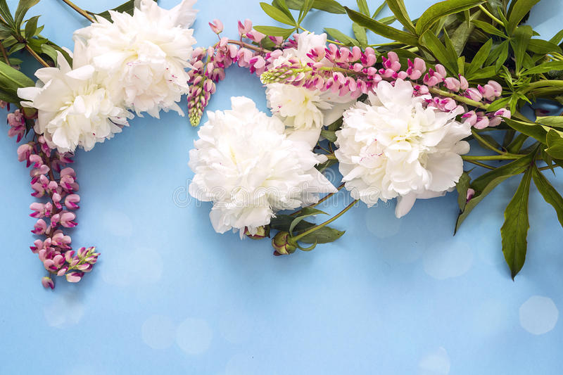 Fond bleu avec les pivoines blanches et les fleurs de loup roses Copiez l'espace photos libres de droits
