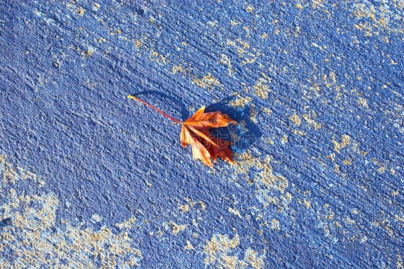 Fond bleu d'automne photo libre de droits