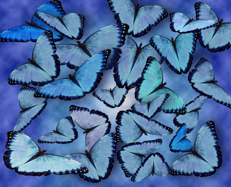 Fond bleu de guindineaux photo stock