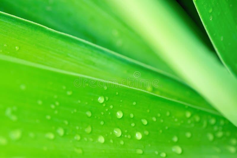 Fond botanique abstrait brouillé de nature Grande palmette verte élégante avec des baisses de pluie Calibre d'affiche de papier p photos stock