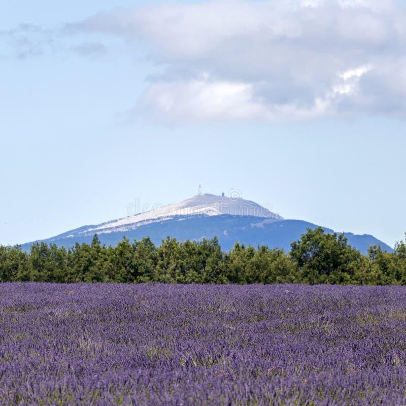 Fond brouillé avec des gisements de lavande et Mont Ventoux dans la distance images libres de droits