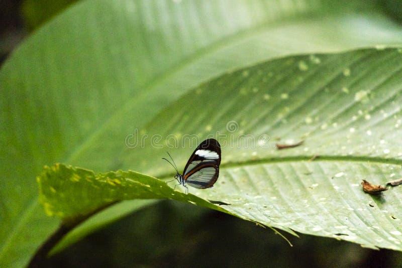 Fond brouillé avec la scène vivante de papillon dans les jungles, bassin du fleuve Amazone en Amérique du Sud image libre de droits