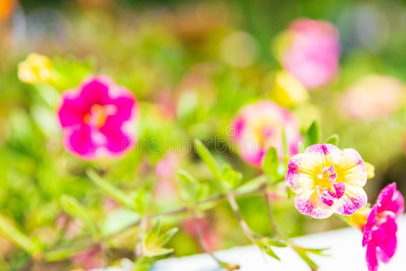 Fond brouillé de beaux wildflowers dans le jour ensoleillé image libre de droits