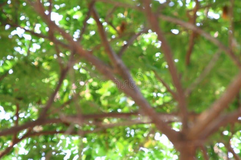 Fond brouillé de forêt d'arbre, usine verte molle de fond de bokeh abstrait de nature, fond frais de texture d'arbre d'été photographie stock libre de droits