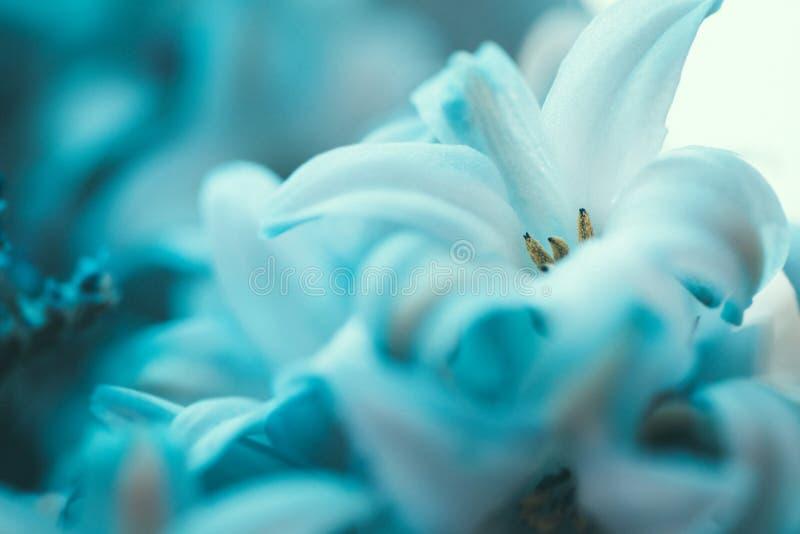 Fond brouillé floral bleu de résumé Macro photographie Beaux-arts photos stock