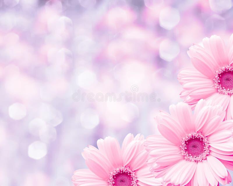 Fond brouillé par frontière florale, camomille de fleurs photo stock