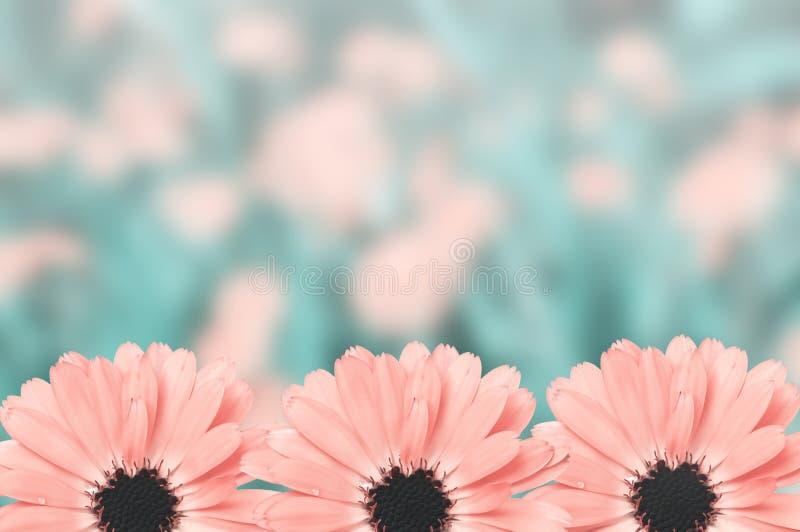 Fond brouillé par frontière florale scénique, fleurs photo libre de droits