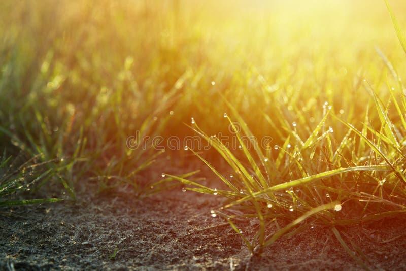 Fond chaud d'automne avec le pré lumineux coloré pendant le su photographie stock libre de droits