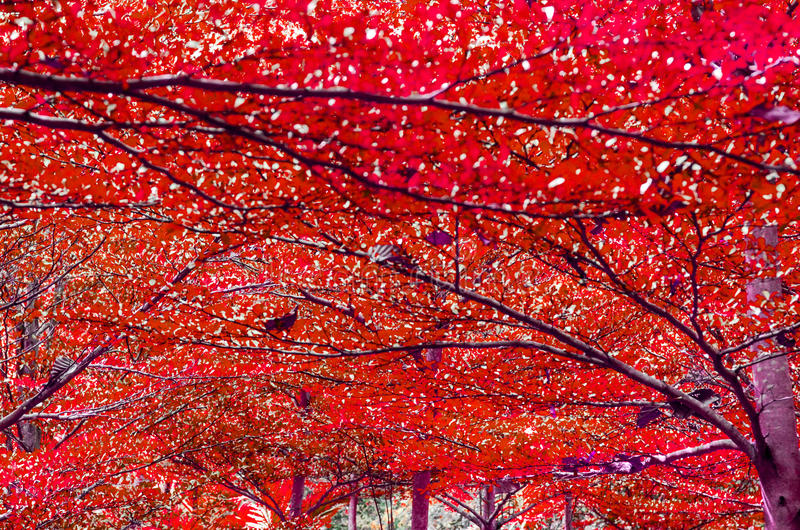 Fond coloré d'abrégé sur beautifu de forêt photographie stock libre de droits