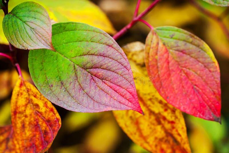 Fond coloré d'automne Feuilles automnales lumineuses images stock