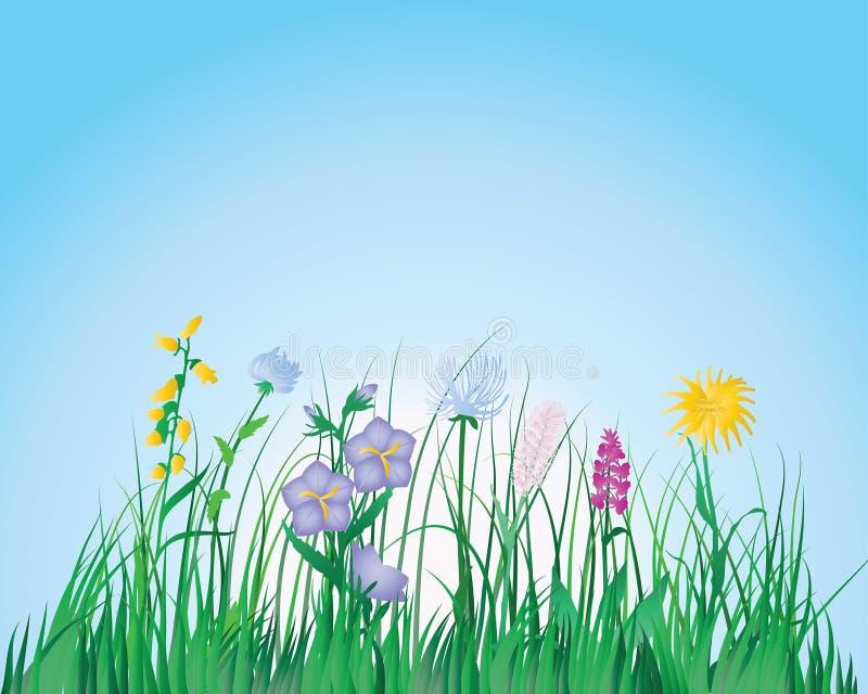 Fond coloré d'herbe illustration libre de droits