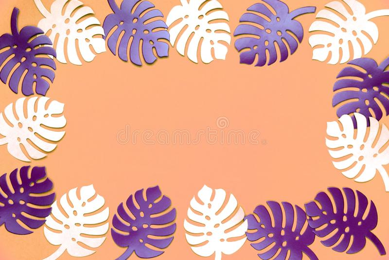 Fond coloré d'usine de monstera Monstera part sur le fond de corail de couleur Concept minimal d'été photographie stock libre de droits