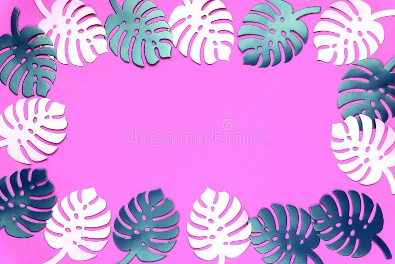 Fond coloré d'usine de monstera Monstera part sur le fond de corail de couleur Concept minimal d'été photo libre de droits