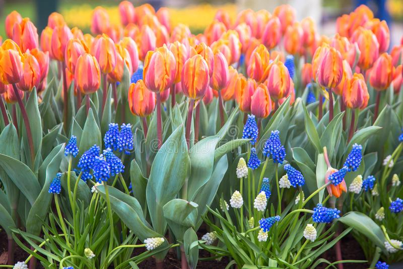 Fond coloré de fleur de source photographie stock