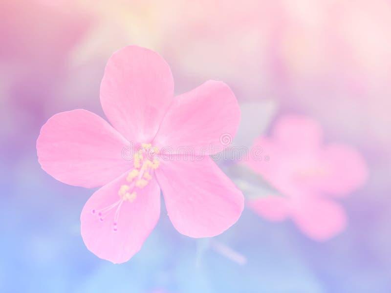 Fond coloré de fleur trouble abstraite de ketmie images libres de droits