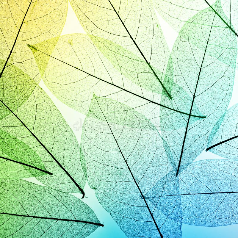 Fond coloré de lames Laissez la texture image stock