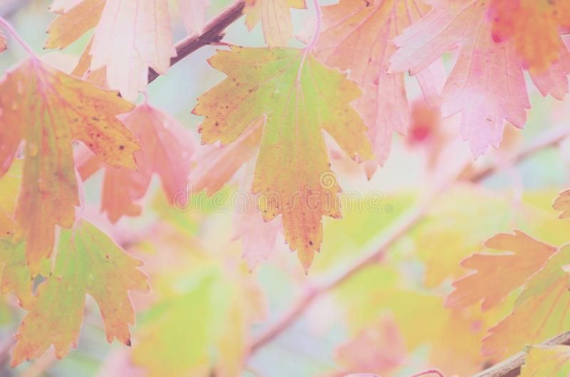Fond coloré et en pastel de feuille brouillée d'automne photos libres de droits