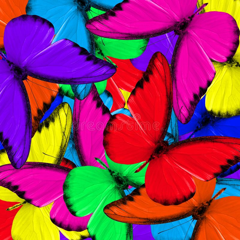 Fond coloré fait de papillons de fantaisie photos libres de droits