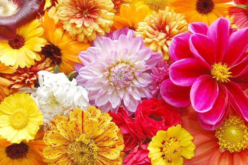 Fond coloré multi de configuration de fleurs photo stock