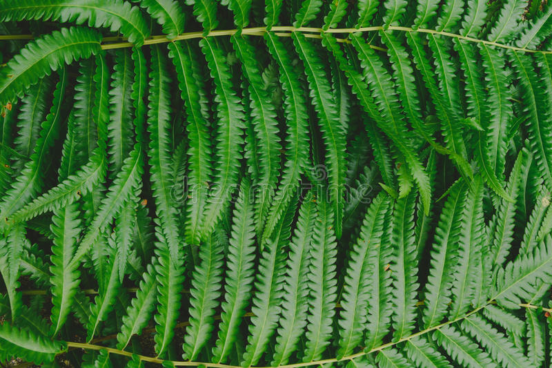 fond cru de modèle de forêt de verdure de fougère photo libre de droits