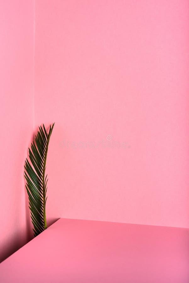 Fond décoratif d'abrégé sur rose L'espace créatif de copie de disposition image libre de droits