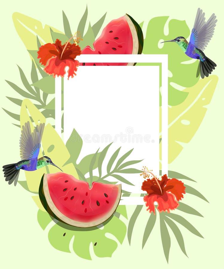 Fond d'été avec les colibris, la pastèque et la ketmie rouge Cadre floral avec de petits colibris volant près des fleurs illustration de vecteur