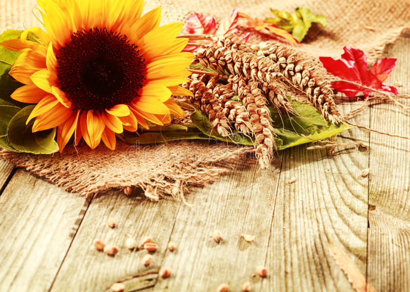 Fond d'été avec un tournesol et un blé photo stock