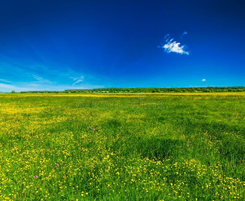 Fond d'été de ressort - pré de floraison de champ images stock